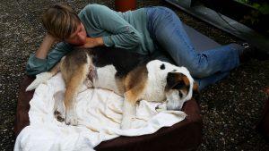 Sterbebegleitung bei Tieren