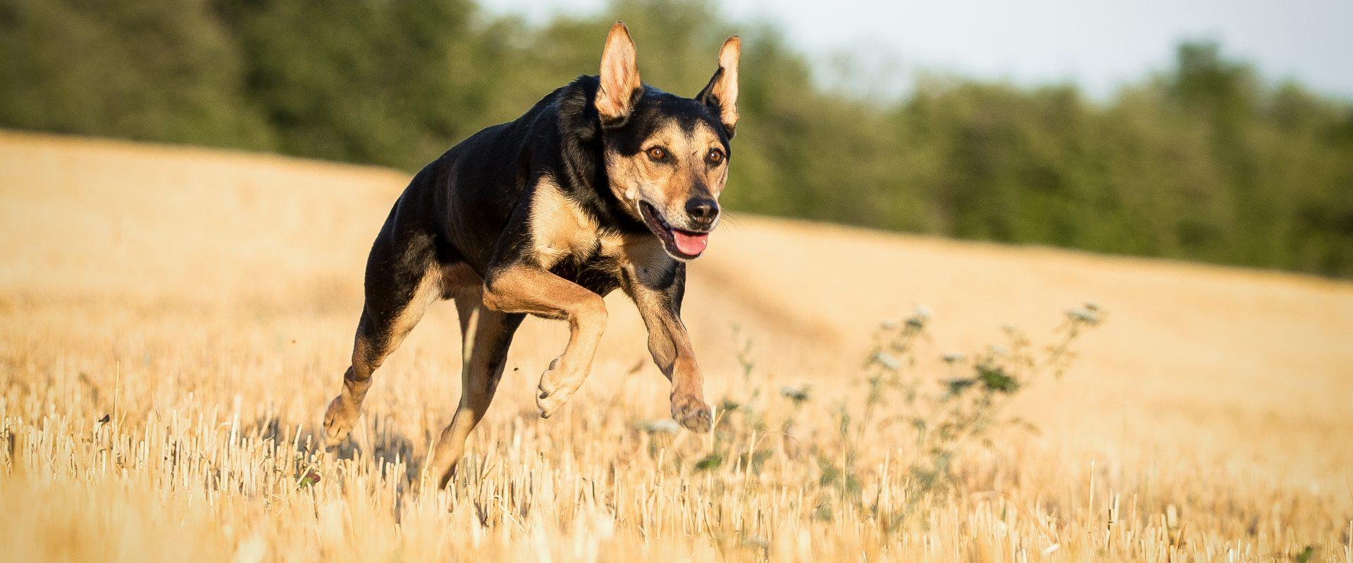 Permalink auf:Wie funktioniert Tierkommunikation?
