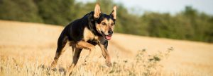 Wie funktioniert Tierkommunikation