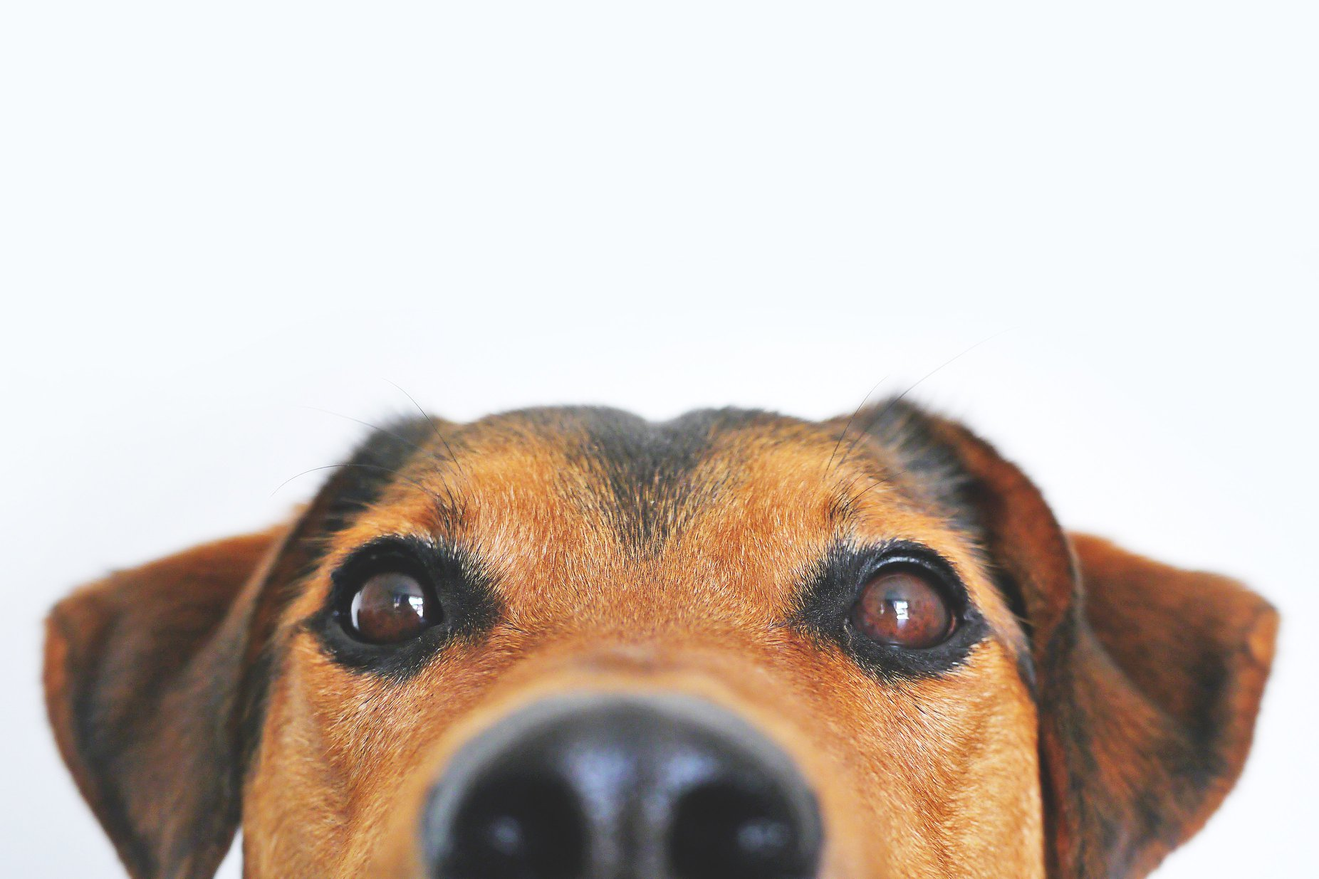 Bodyscan - Ergänzung zum Tierarztbesuch