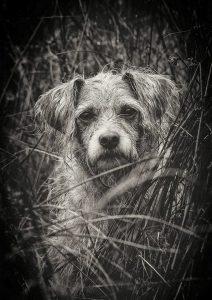 Suche vermisster Tiere