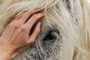 Mein tierischer Seelengefährte - Tierkommunkation im Saarland
