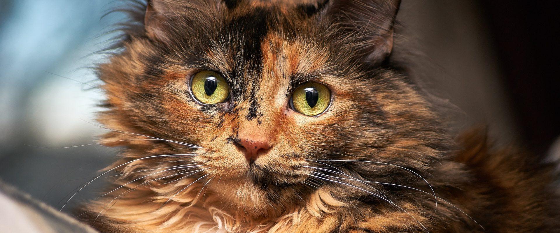 Permalink auf:Ablauf Tierkommunikation